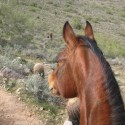 What is the Greatest Threat to Your Horsemanship?