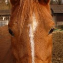 The Story Of A Horse Called Jiggs