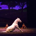 Review of Cavalia's Odysseo
