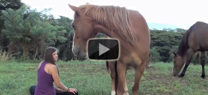 Connecting with Horses through Peace