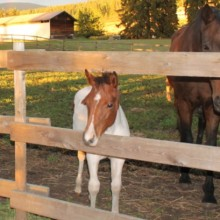 Coping Skills With Horses