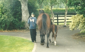 Stratus and foal going for a walk
